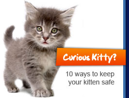 Curious Kitty? 10 ways to keep your kitten safe