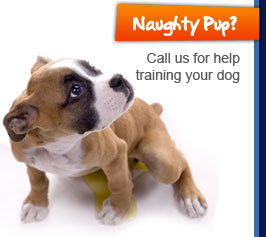 Naughty Pup? Call us for help training your dog